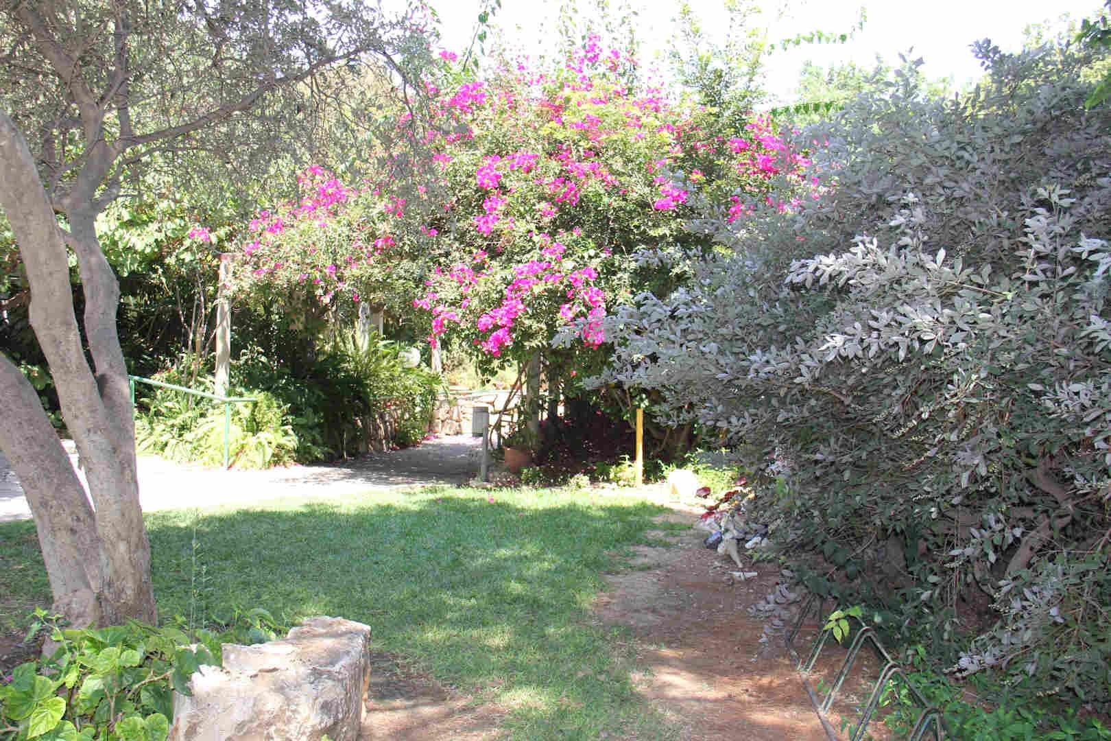 בית נועם חצר